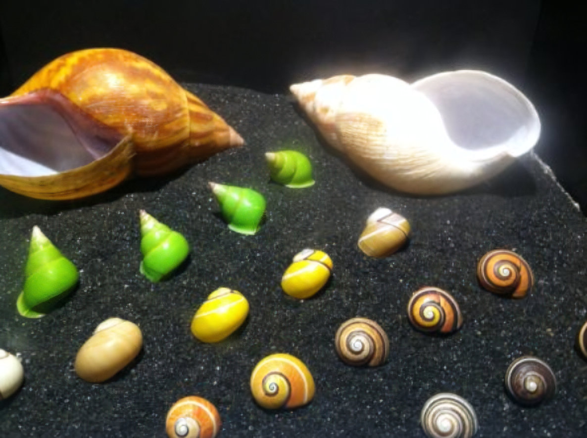 Shells displayed at the Academy of Natural Sciences, Philadelphia